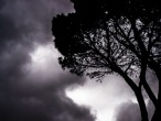 Dark-tree-clouds