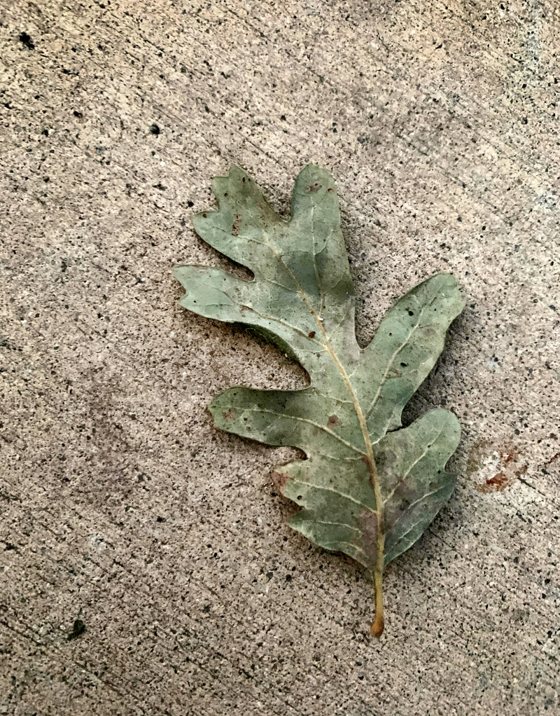leaf-on-cement-final