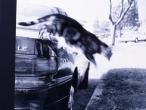 blury cat
