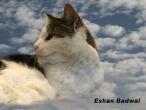 Eshan-Badwal-Clouds-Montage-2