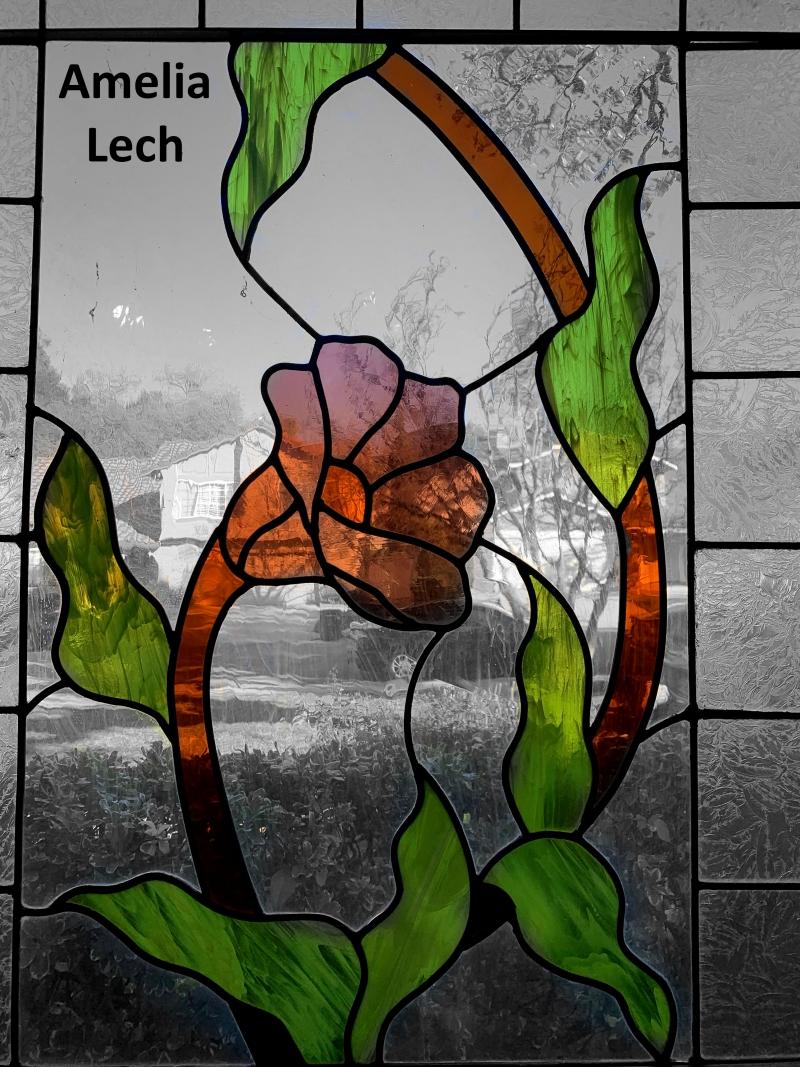 Amelia-Lech