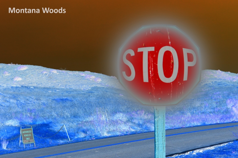 Montana-Woods-filter