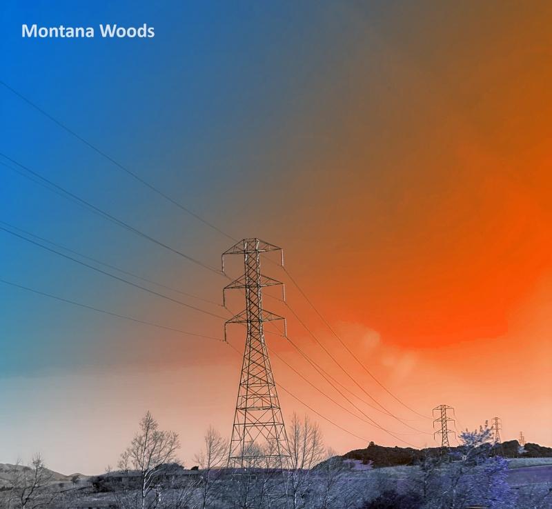 Montana-Woods-gradient