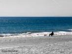 art-show-man-on-beach