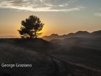 George Graziano Landscape