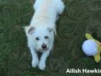 Ailish-Hawkins-4-