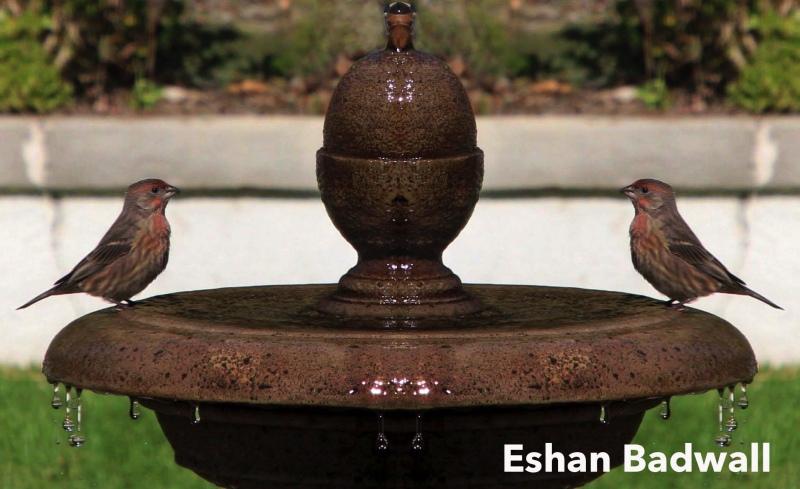 Eshan-Badwall-3