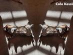 Cole-Kessler-4-