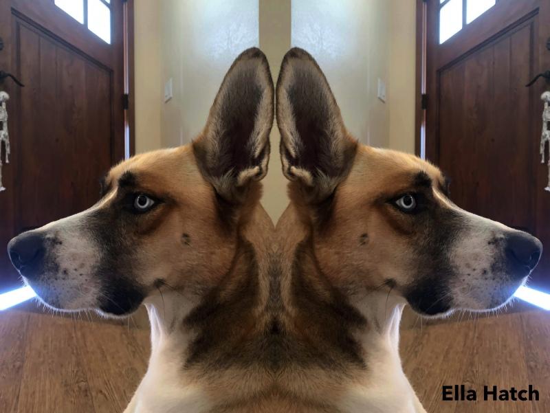 Ella-Hatch-4