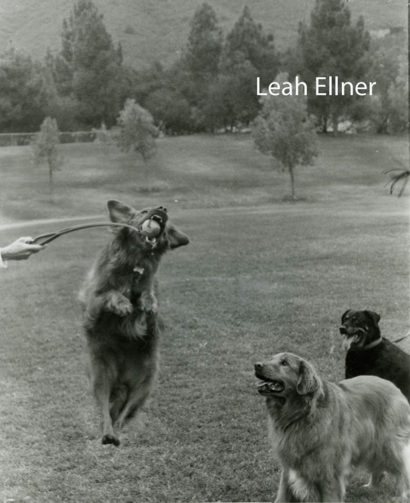 Leah Ellner copy
