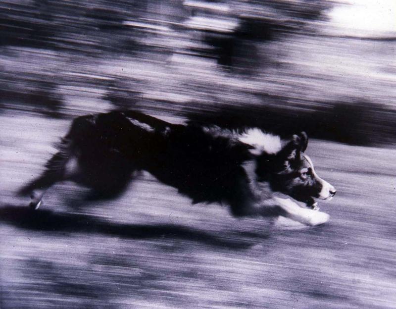 runningdog