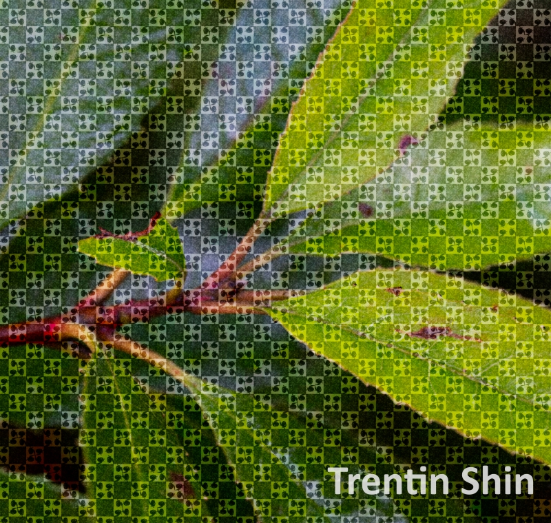 Trentin-Shin-photo-pattern