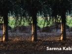 Sarena-Kabir-2