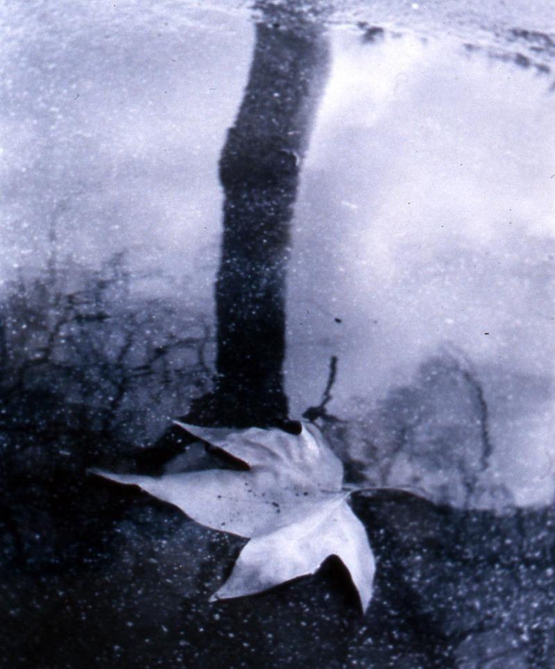 leaf-puddle