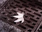 leaf on drain