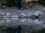 edyn-stepler-reflect